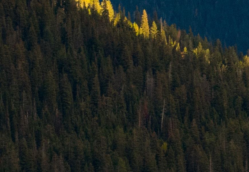 100% crop, cada árvore é renderizada pela 50-100mm, limitada pelo sensor de 24MP da EOS 80D.
