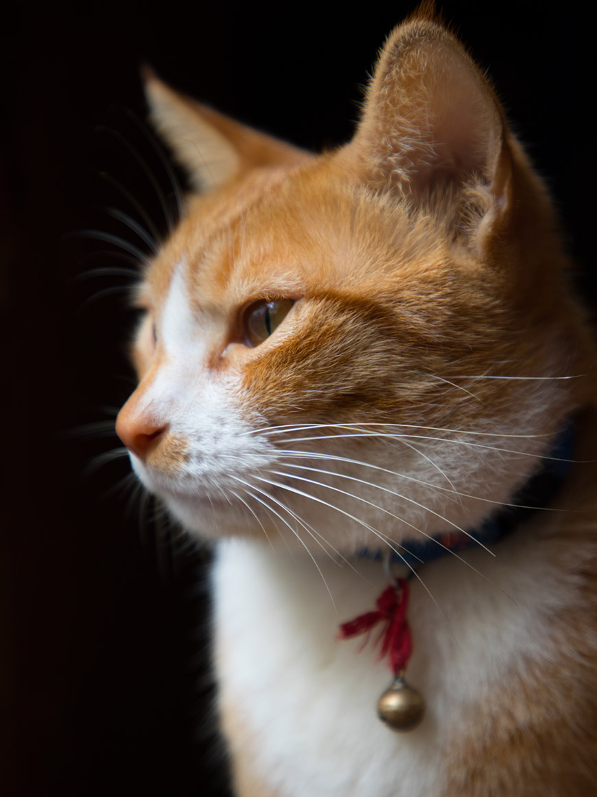 """Gato"" com a EOS 5D Mark IV + EF 24-105mm f/4 L IS II USM em f/4 1/100 ISO500 @ 105mm."