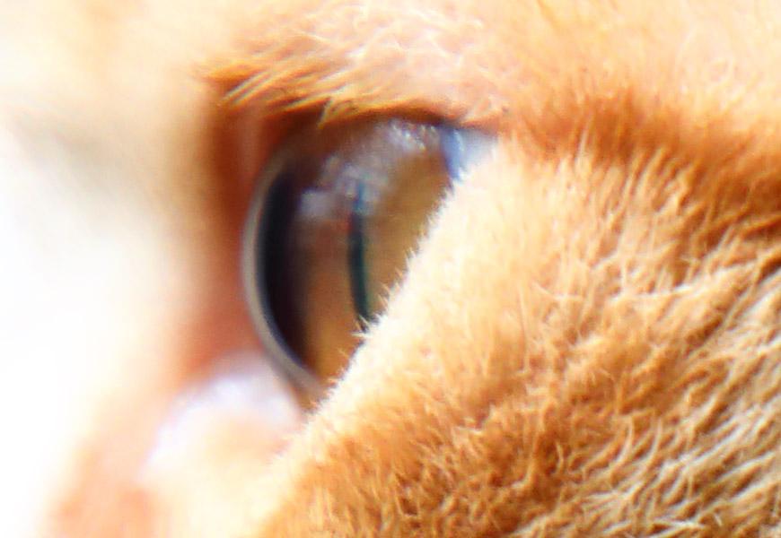 Crop 100%, leve suavidade na exata distância mínima de foco, o limite do projeto zoom.