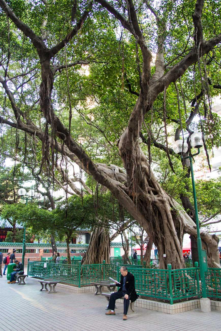 """""""Árvore"""" em f/4 1/30 ISO250 @ 17mm."""