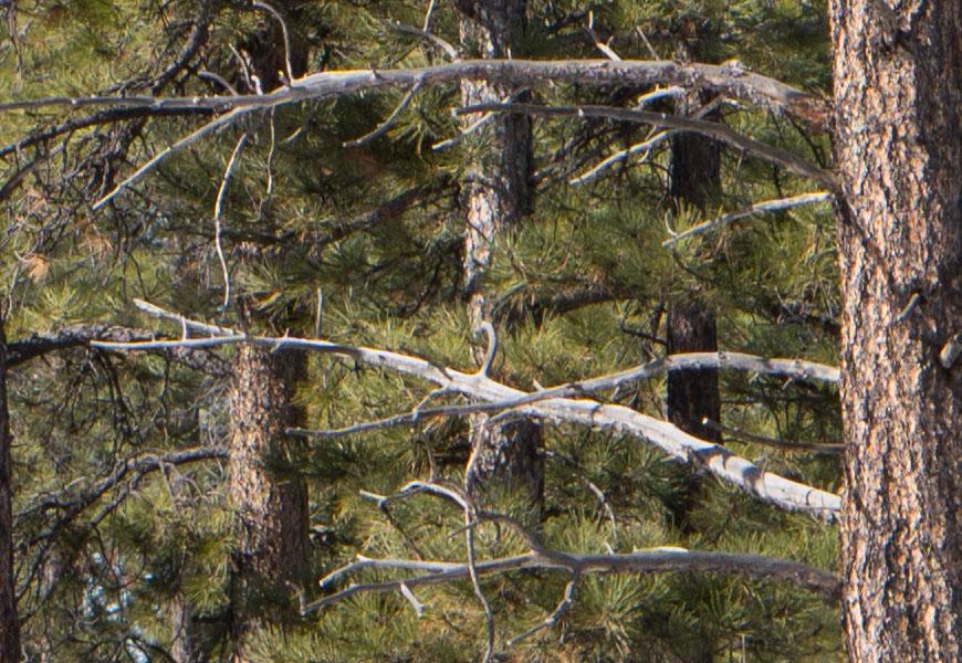 Crop 100%, todos os galhos das árvores, flertando com os resultados de uma câmera sem filtro loa-pass.