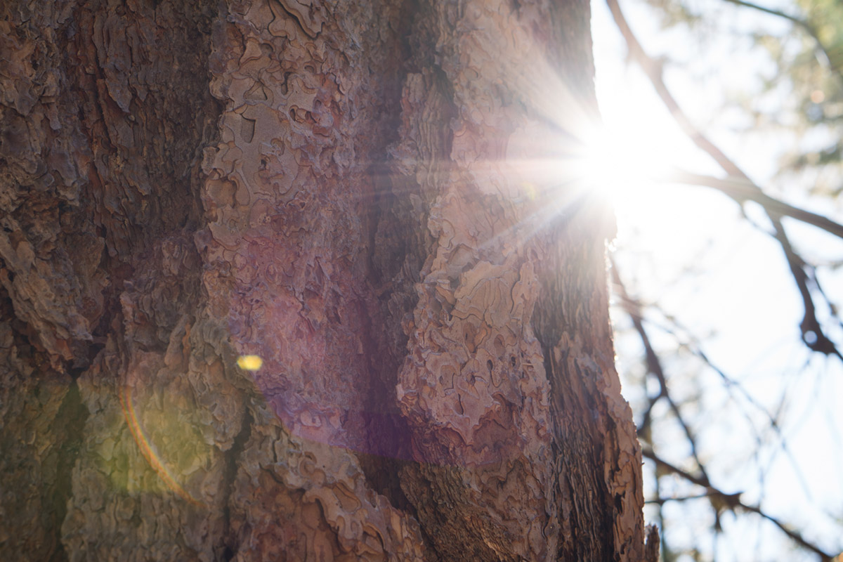 """""""Flaring"""" em f/5.6 1/80 ISO125; reflexos internos quando a luz incide diretamente no quadro."""