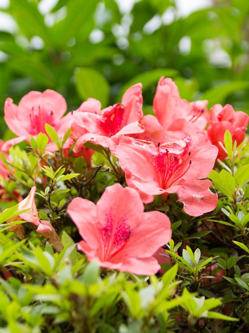 """""""Flores"""" em f/6.3 1/80 ISO100 @ 95mm; desfoque suave."""