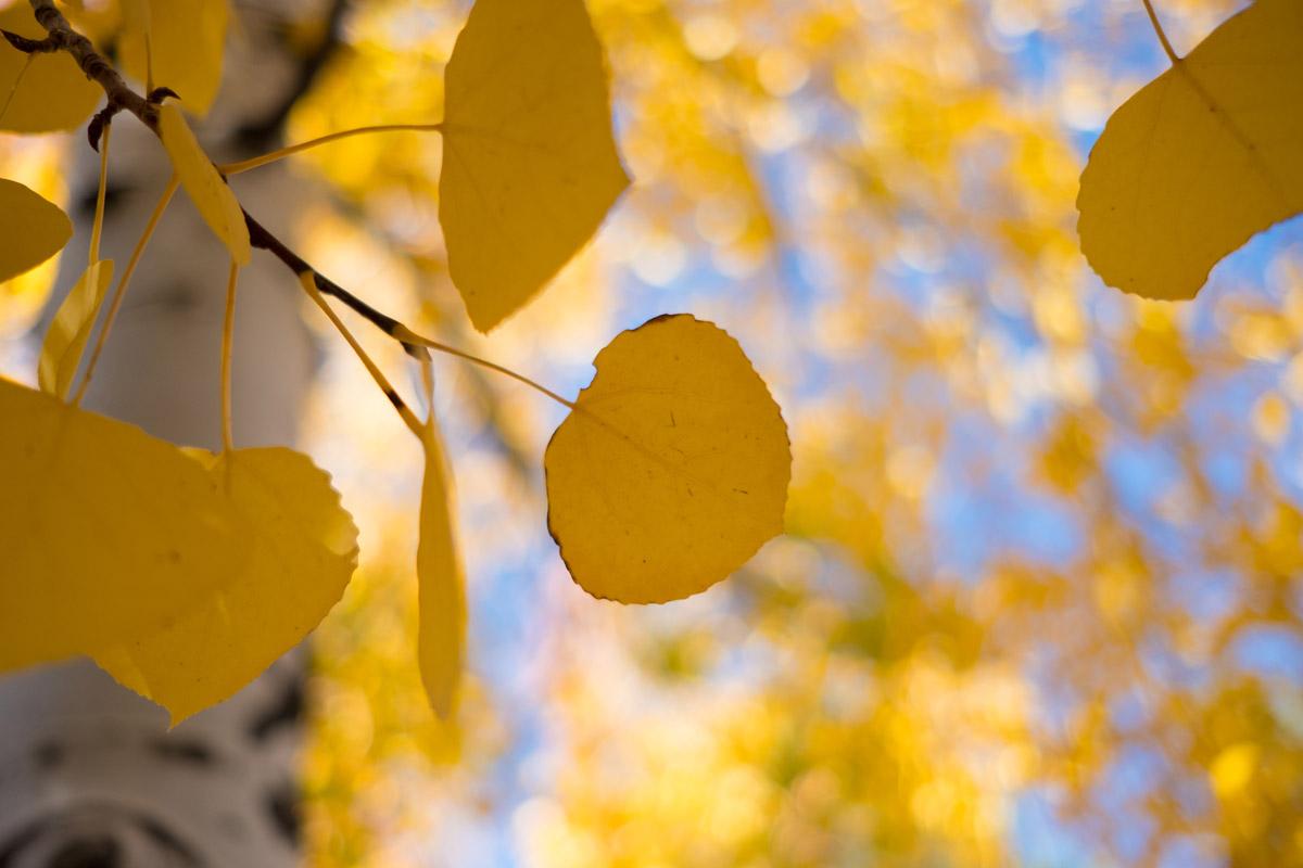 """""""Amarelo"""" em f/2 1/1800 ISO200."""