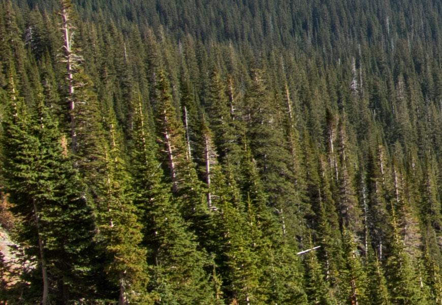 Crop 100%, todas as árvores perfeitas reproduzidas, limitadas apenas pela óptica da objetiva zoom.