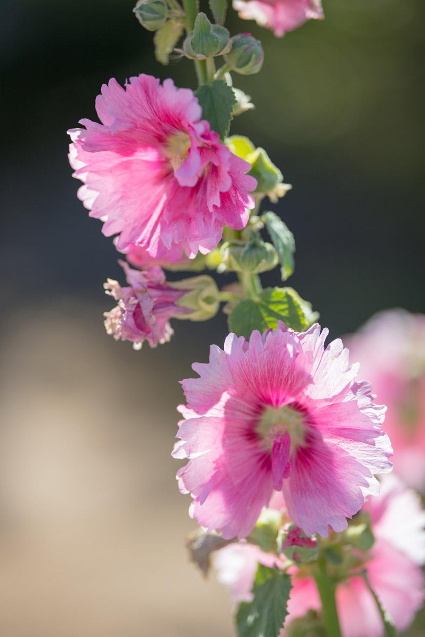 """""""Flores"""" at f/1.8 1/2000 ISO100; cores simpáticas sob luz solar."""
