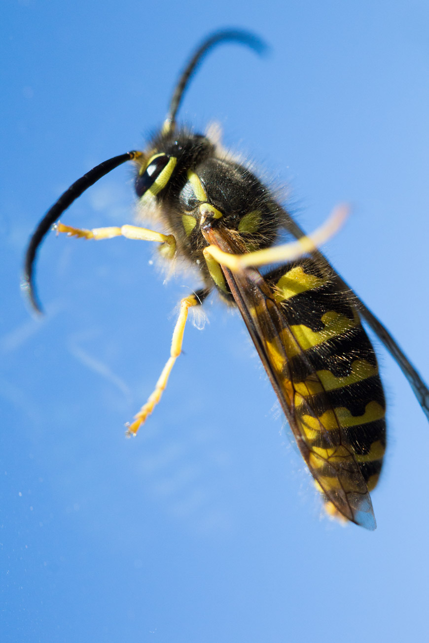 """""""I'm bee"""" em f/8 1/320 ISO800; todas as foto com a Canon EOS M; arquivos raw disponíveis no Patreon."""