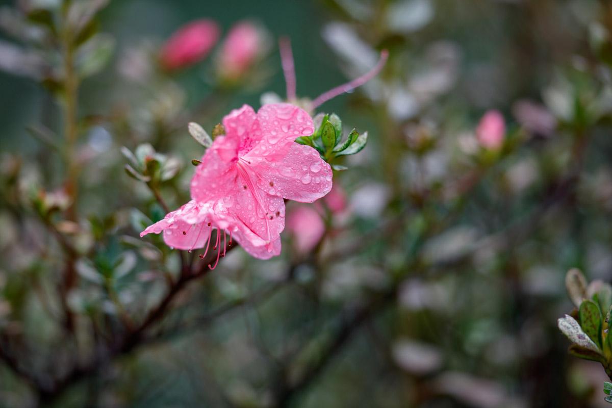 """""""Flor"""" at f/2.8 1/250 ISO100; desfoque não é dos mais suaves, típico do telephoto."""
