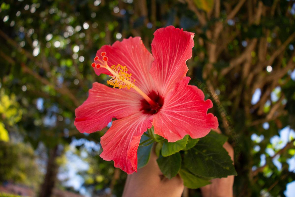"""""""Flor"""" em f/4 1/500 ISO400 @ 18mm; foco mínimo permite fotos com curta profundidade de campo."""